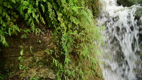 Tropical jungle waterfall with strong stream stock video