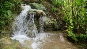 Tropical jungle waterfall with strong stream, Java, Indonesia stock video footage