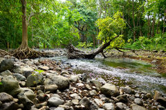 Tropical jungles of Mauritius island Royalty Free Stock Images