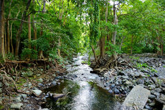 Tropical jungles of Mauritius island Stock Photos