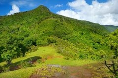 Tropical jungles of Mauritius island Stock Photos