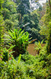 Tropical jungles Stock Photos