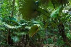 Tropical jungles Royalty Free Stock Images