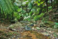 Tropical jungles Stock Image