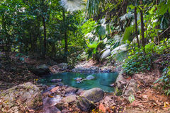 Tropical jungles of South East Asia Royalty Free Stock Photos