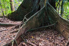Tropical jungles of South East Asia Stock Photography