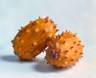 Tropical kiwano fruits. Pair of spiky kiwano fruits on a white backdrop, lit with natural sunlight royalty free stock photo