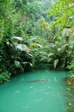 Tropical lagoon. In jungle with green water Royalty Free Stock Photography