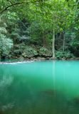 Tropical lagoon. In jungle with green water Stock Photos