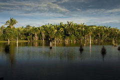 Tropical Lagoon in Brazil. South America Stock Photography