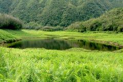 Tropical lake Royalty Free Stock Photo