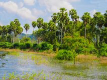 Tropical Lake Royalty Free Stock Images