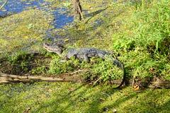 A tropical lake and animal Stock Photo