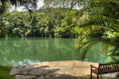 Tropical lake. Lake with a bench in Inhotim, Brazil Royalty Free Stock Photos