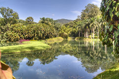 Tropical lake. Lake in Inhotim, Brazil Stock Images