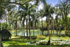 Tropical lake. Lake with palm trees in Inhotim, Brazil Stock Images