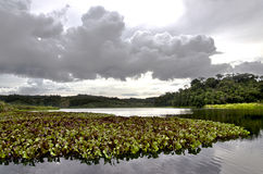 Tropical Lake with plants and forest stock images