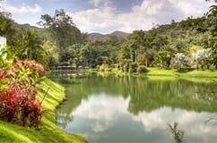 Tropical lake. Lake with plants in Inhotim, Brazil Stock Photos