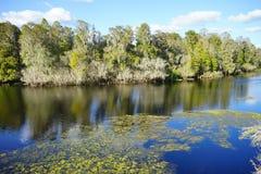 A tropical lake Royalty Free Stock Image