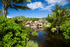 Tropical landcape, lake, palm tree, sky and green bushes Royalty Free Stock Image