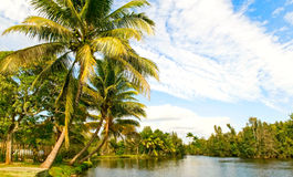 Tropical landsape royalty free stock photo