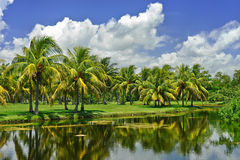Tropical landscape. Fairchild tropical botanic garden, FL, USA Royalty Free Stock Photo