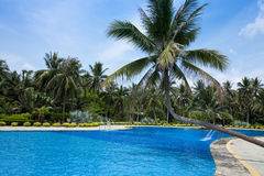 Tropical landscape. Swimming pool with palm trees in tropical resort Royalty Free Stock Photo