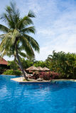 Tropical landscape. Swimming pool with sunshade and reclining chairs in the tropical resort Royalty Free Stock Photo