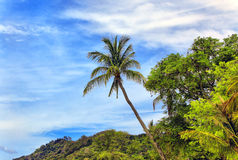 Tropical landscape Royalty Free Stock Image