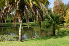 Tropical Landscape. Tropical scene photographed at Fullerton Arboretum Stock Photos