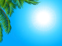 Tropical landscape background with palm tree Royalty Free Stock Image