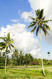 Tropical landscape in bali indonesia Royalty Free Stock Images