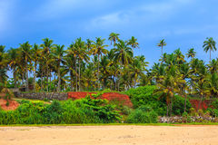 Tropical landscape with blue sky and palm trees. Stock Images