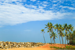 Tropical landscape with blue sky and palm trees. Stock Photo