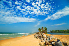 Tropical landscape with blue sky and palm trees. Royalty Free Stock Photos