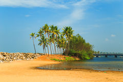 Tropical landscape with blue sky and palm trees. Stock Photography