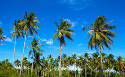 Tropical landscape with coco palm trees. Exotic place view with palm tree silhouettes Royalty Free Stock Photos