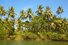 Tropical landscape with coconut palm tree. Royalty Free Stock Image