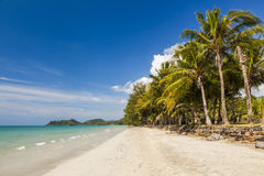 Tropical landscape with coconut palms and sandy beach. Stock Photo