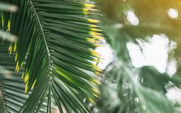 Tropical Landscape Green Leaves Summer Time. Tropical Landscape Green Leaves Holiday Travel Background Journey Summer Concept Flowers Toned Photo royalty free stock images