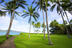 Tropical landscape of Hayman Island, Queensland Au. Stralia. Coconut trees, clear blue sky, blue ocean and green grass Royalty Free Stock Image