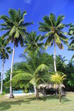 Tropical landscape Royalty Free Stock Images