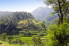 Tropical landscape. Indonesia. Bali. Royalty Free Stock Photo