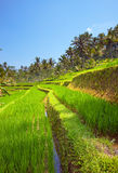 Tropical landscape. Indonesia. Bali Royalty Free Stock Photo