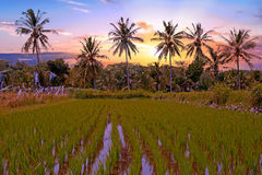 Tropical landscape on Java Indonesia at sunset Stock Photography