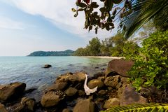 Tropical landscape of Koh Kood. Summer landscape on tropical koh Kood island in Thailand. Panorama of white sand beach with coconut palms taken on Klong Chao Royalty Free Stock Photo