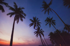 Tropical landscape by night, silhouettes of palm trees Royalty Free Stock Photo