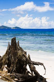 Tropical landscape with ocean beach, wood trunk. Stock Photo