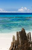 Tropical landscape with ocean beach, wood trunk. Stock Image