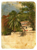 Tropical Landscape. Old postcard. Stock Photo